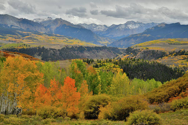 Photograph - Colorful Aspen Groves Along Last Dollar Road by Ray Mathis