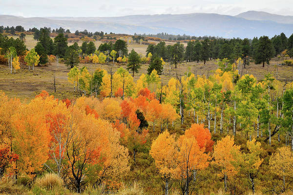 Photograph - Colorful Aspens Above Ridgway Colorado by Ray Mathis