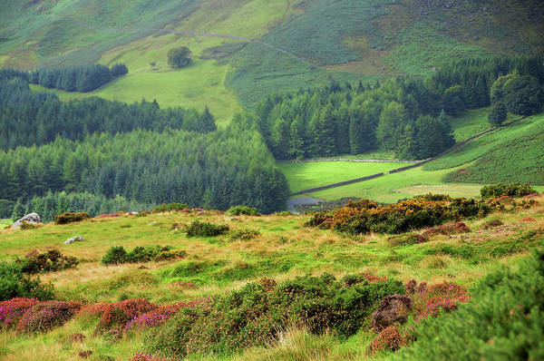 Photograph - Colorful Autumn In Wicklow. Valley by Jenny Rainbow