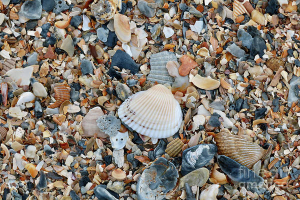 Wall Art - Photograph - Colorful Beach Shells by Carol Groenen