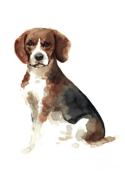Wall Art - Painting - Colorful Beagle Poster Domestic Animal Watercolor Painting Brown Black Doggie Picture by Joanna Szmerdt