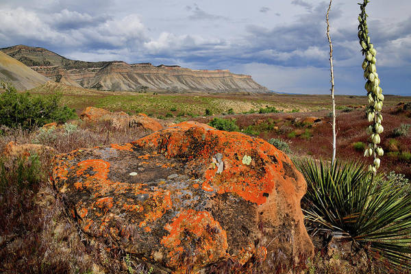 Photograph - Colorful Boulder At Book Clifss by Ray Mathis