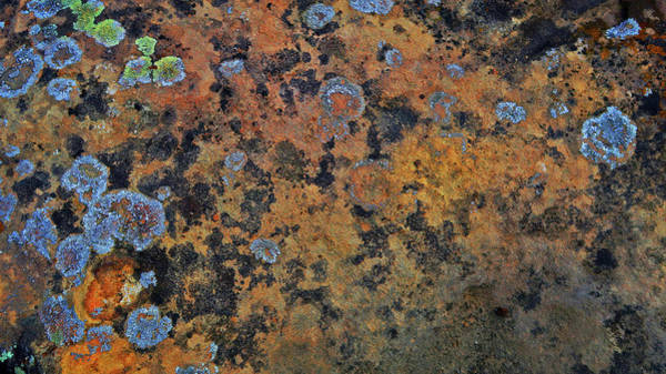 Photograph - Colors In A Boulder by Connie Fox