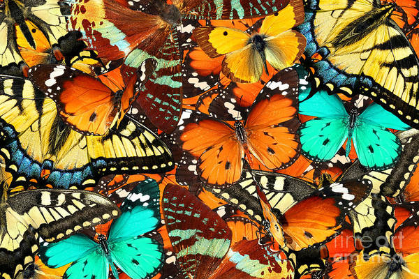 Wall Art - Photograph - Colorful Butterflies Background. Nature by Protasov An
