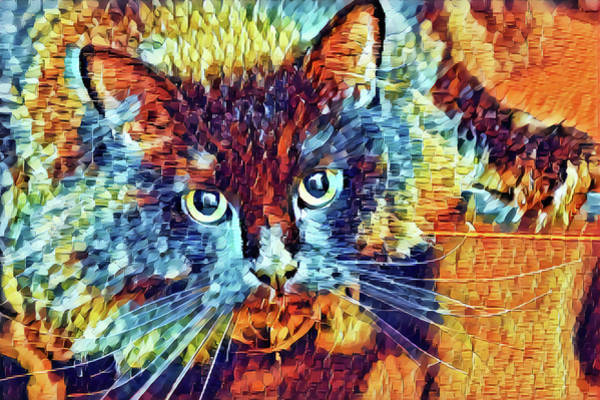 Digital Art - Colorful Cat Abstract by Don Northup