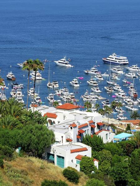 Wall Art - Photograph - Colorful Catalina by Connor Beekman