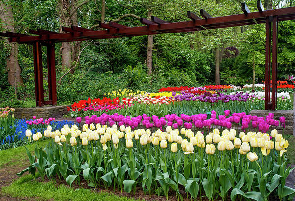 Photograph - Colorful Collection Of Tulips In Keukenhof by Jenny Rainbow