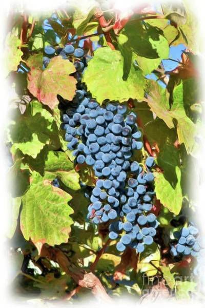 Wall Art - Photograph - Colorful Fall Grapes - Digital Painting by Carol Groenen
