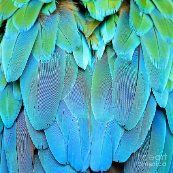 Wall Art - Photograph - Colorful Feathers, Harlequin Macaw by Panu Ruangjan