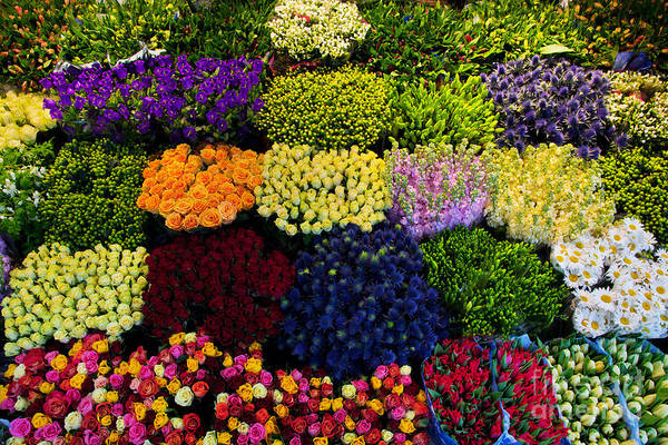 Colourful Wall Art - Photograph - Colorful Flowers In A Florists by Photocreo Michal Bednarek