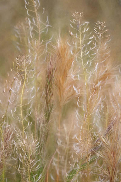 Photograph - Colorful Grasses by Leda Robertson