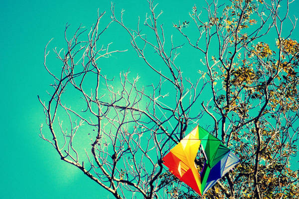 Wall Art - Photograph - Colorful Kite Stuck In A Tree by Meredith Winn Photography