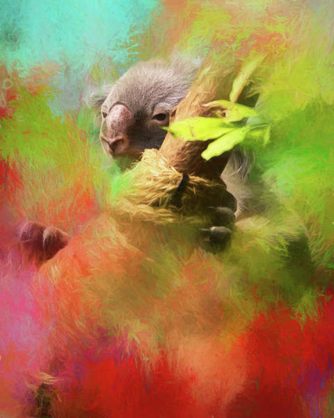 Photograph - Colorful Koala by Gloria Anderson