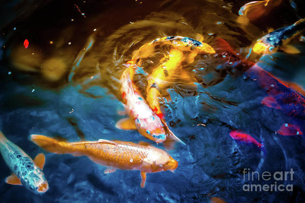Wall Art - Photograph - Colorful Koi by Colleen Kammerer