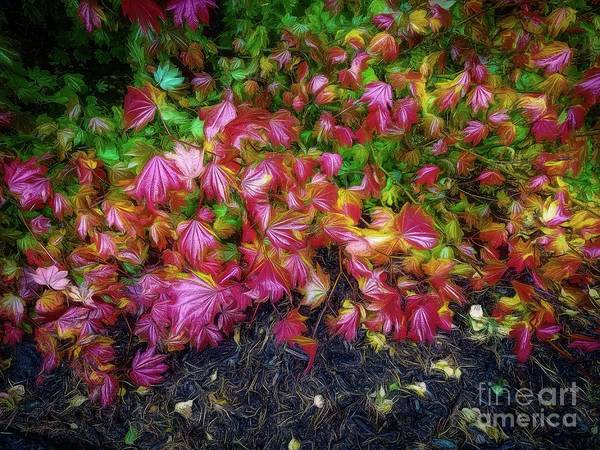 Wall Art - Photograph - Colorful Leaves by Jon Burch Photography