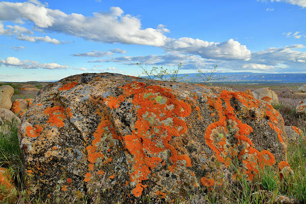 Photograph - Colorful Lichen Covered Boulders At Book Cliffs by Ray Mathis