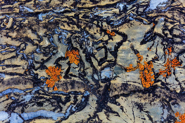 Wall Art - Photograph - Colorful Lichen Encrusted Rock by Chuck Haney