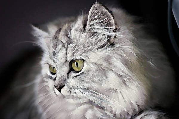 Wall Art - Digital Art - Colorful Lovely White Cat by Terry Davis