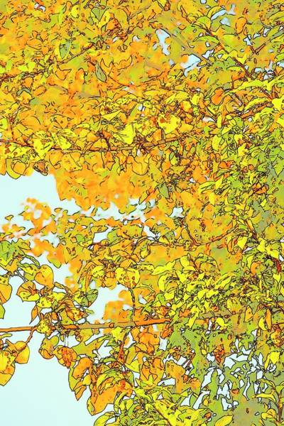 Photograph - Colorful Maple Leaves by Jerry Sodorff