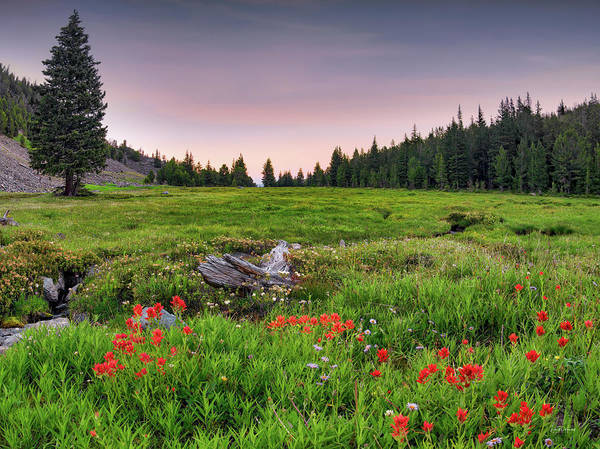 Wall Art - Photograph - Colorful Mountain Meadow by Leland D Howard
