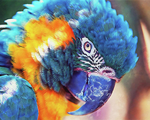 Painting - Colorful Parrot - 01 by Andrea Mazzocchetti