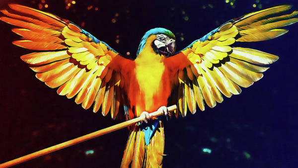 Painting - Colorful Parrot - 02 by Andrea Mazzocchetti