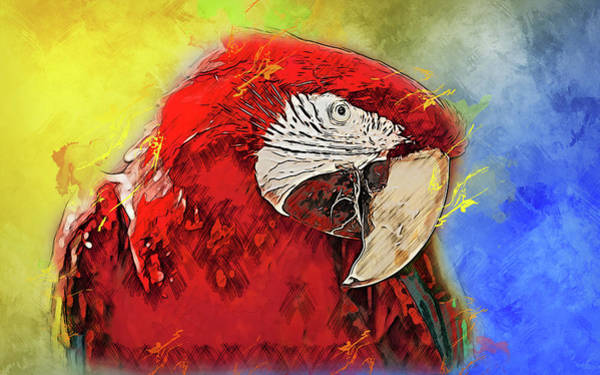 Painting - Colorful Parrot - 03 by Andrea Mazzocchetti