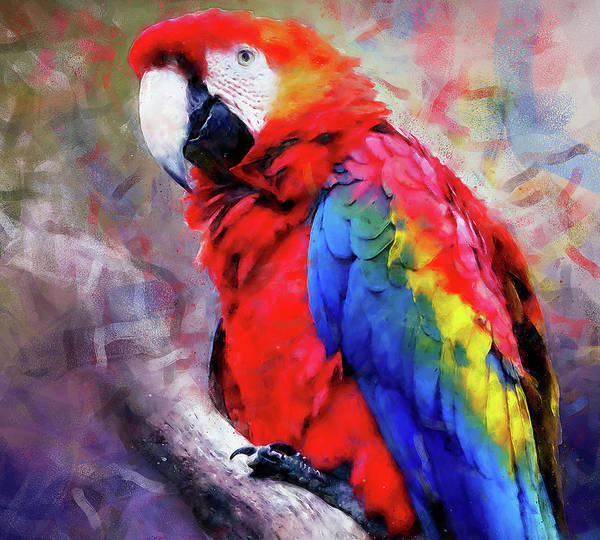 Painting - Colorful Parrot - 04 by Andrea Mazzocchetti