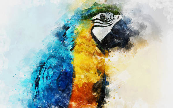 Painting - Colorful Parrot - 06 by Andrea Mazzocchetti
