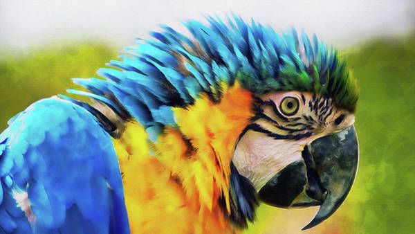 Painting - Colorful Parrot - 07 by Andrea Mazzocchetti