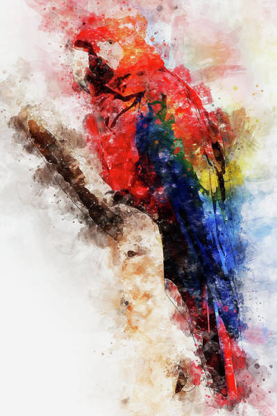 Painting - Colorful Parrot - 08 by Andrea Mazzocchetti