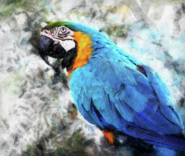 Painting - Colorful Parrot - 09 by Andrea Mazzocchetti