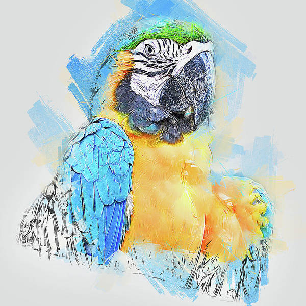 Painting - Colorful Parrot - 10 by Andrea Mazzocchetti