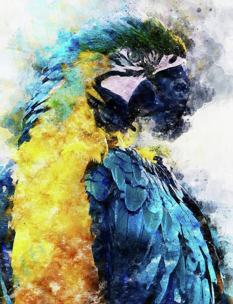 Painting - Colorful Parrot - 11 by Andrea Mazzocchetti