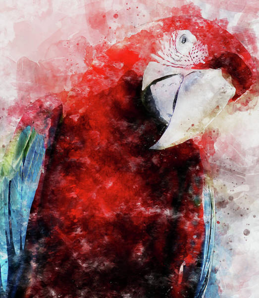 Painting - Colorful Parrot - 12 by Andrea Mazzocchetti