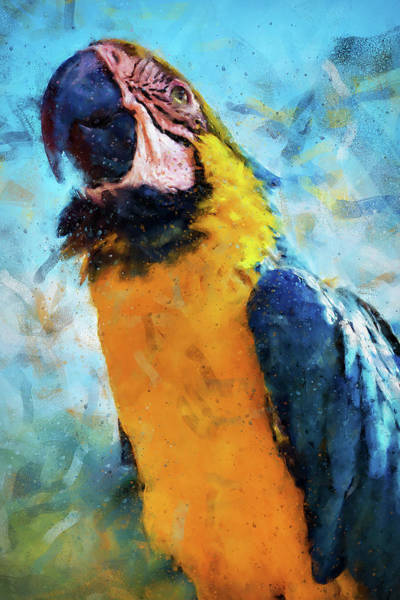 Painting - Colorful Parrot - 13 by Andrea Mazzocchetti
