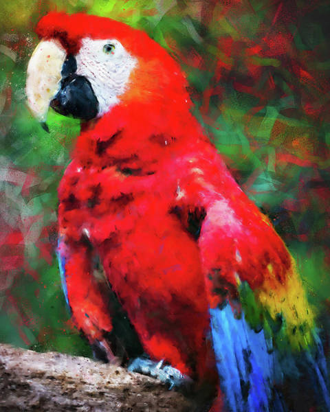 Painting - Colorful Parrot - 14 by Andrea Mazzocchetti