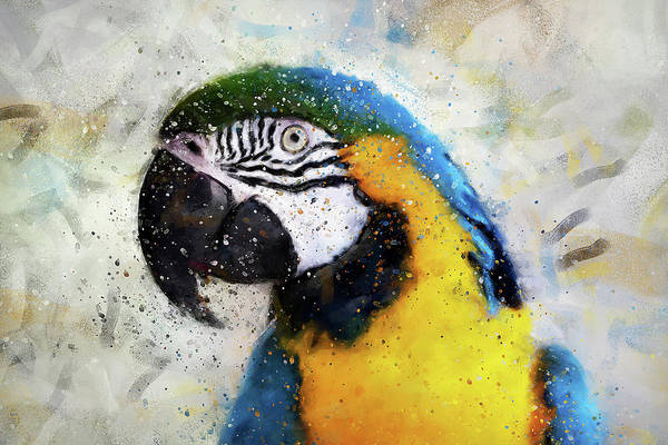 Painting - Colorful Parrot - 15 by Andrea Mazzocchetti