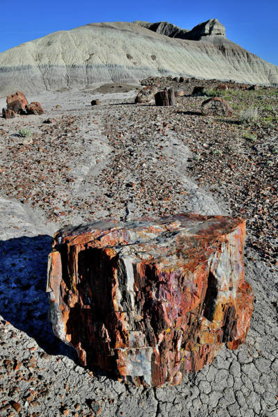 Photograph - Colorful Petrified Wood In Arizona by Ray Mathis
