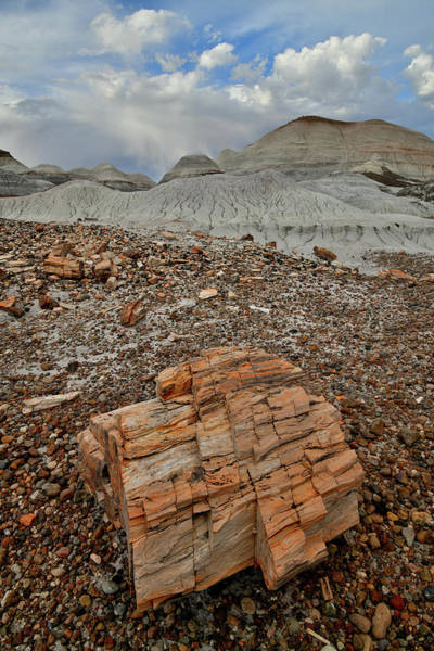 Photograph - Colorful Petrified Wood In Petrified Forest Np by Ray Mathis