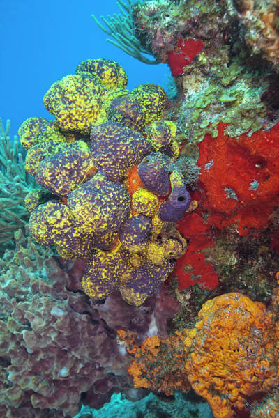 Underwater Scene Photograph - Colorful Reef With Copy Space by Jodijacobson