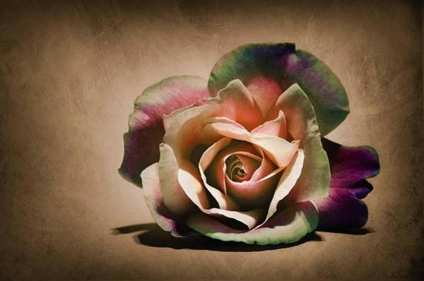 Wall Art - Painting - Colorful Rose by ArtMarketJapan