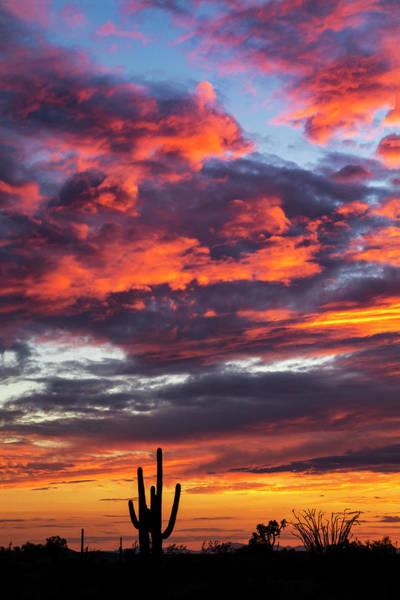Wall Art - Photograph - Colorful Saguaro Sunset  by Saija Lehtonen