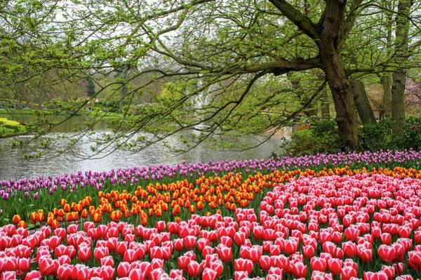 Photograph - Colorful Sea Of Tulips In Keukenhof by Jenny Rainbow