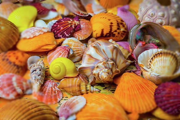 Wall Art - Photograph - Colorful Seashell Collection by Garry Gay