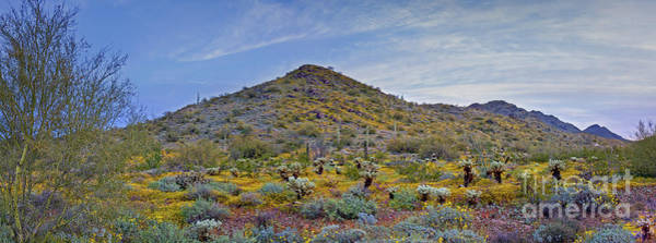 Wall Art - Photograph - Colorful Sonoran Desert by Robert Bales
