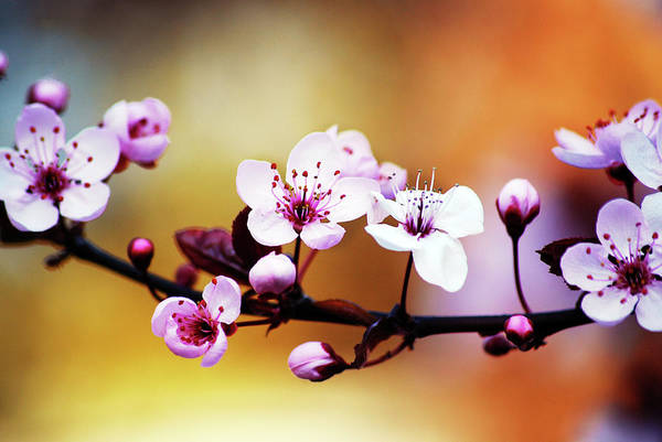 Freshness Photograph - Colorful Spring by Amiplim ~ Laia Solanellas