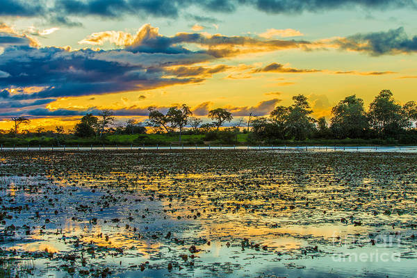 Srilanka Wall Art - Photograph - Colorful Sunset In Pantanal, Brazil by Esb Professional