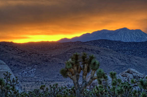 High Dynamic Range Imaging Photograph - Colorful Sunset, Joshua Tree National by Bill Wight