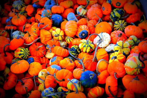 Photograph - Colorful Tiny Pumpkins by Cynthia Guinn